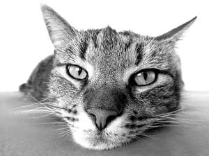Calculating Oregon CAT Commercial Activity Tax